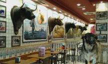 A load of bulls...restaurant in Madrid.
